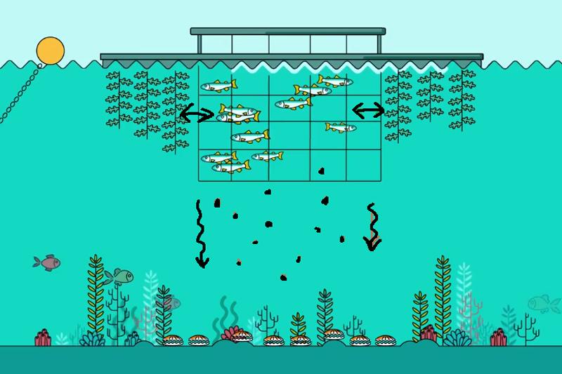 La concession s'étendant sur 3 ha, les crustacés peuvent s'y développer à l'abri, nourris de surcroit par les rejets des truites. De plus, les parcs sont lestés par des blocs de granit dont les alvéoles sont autant de nichoirs favorisant la biodiversité.